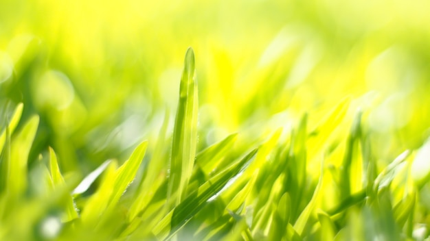 Close up green color grass leaf in fresh meadow field. selective focus on middle range composition. happy feeling worm environment