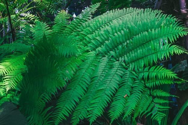 Крупным планом зеленый лист папоротника природа фон
