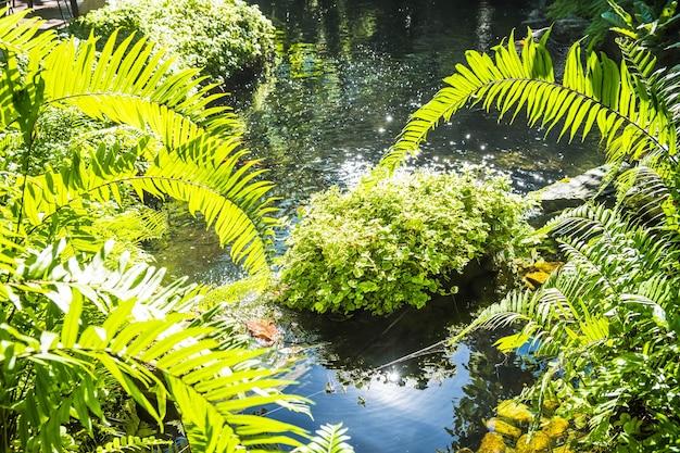 Закройте вверх по зеленому листу папоротника с фоном воды. фон образца листьев папоротника. текстура тропических зеленых листьев