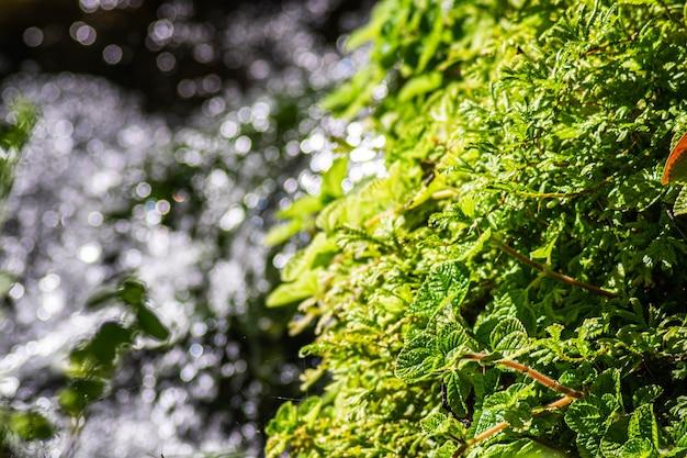 Крупным планом зеленый лист папоротника с водным фоном