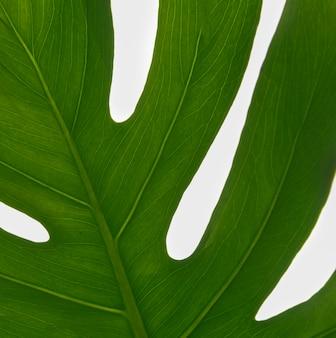 Close-up green foliage leaf concept