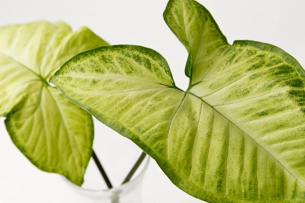 근접 녹색 단풍 잎 개념