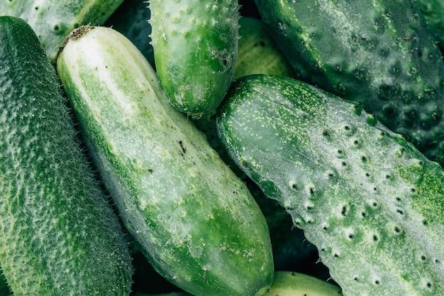 Close up of green fresh cucumbers