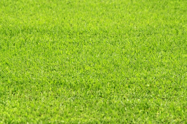 Close up of green grass, nature background