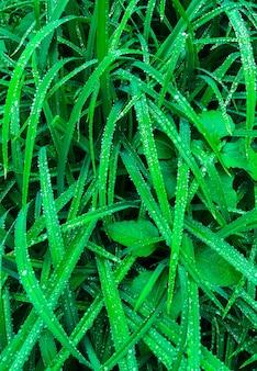 Закройте зеленую траву с каплями дождя