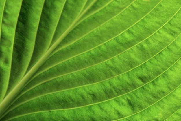 Крупным планом зеленый лист фон