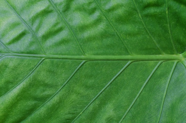 Close up green leaf on background.