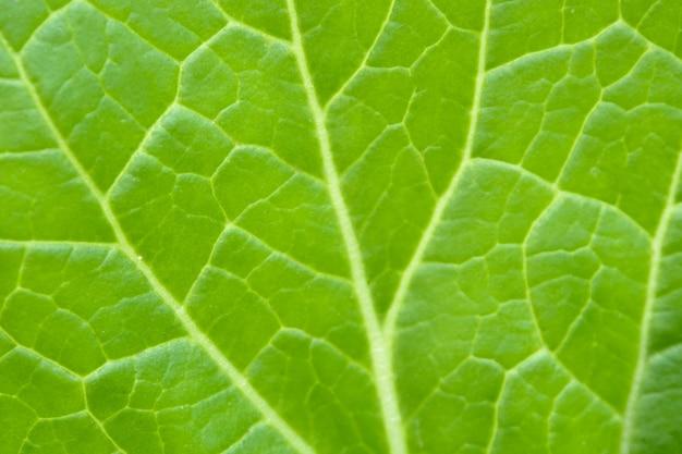 Close up green leaf background
