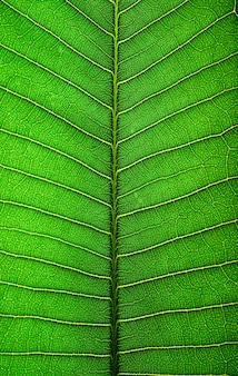 Close up green leaf line