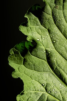 Close-up of green leaf nerves with water drops