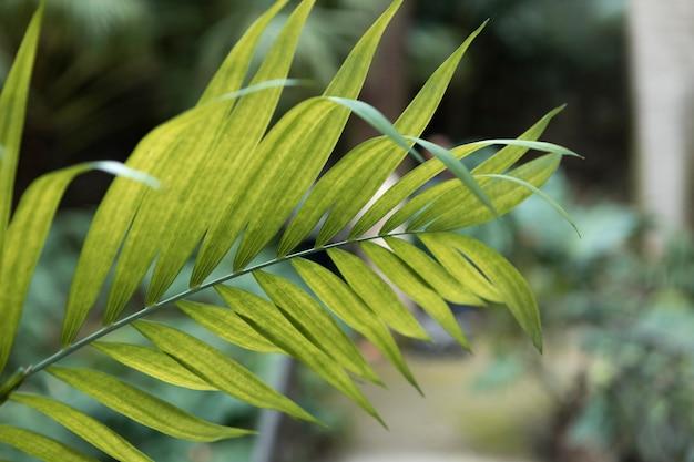 야외에서 녹색 잎을 닫습니다