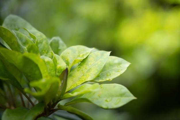 Close up green leaf under sunlight in the garden.