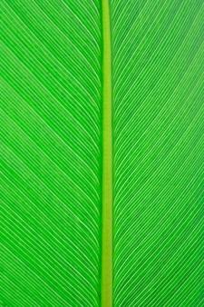 Крупным планом зеленый лист текстуры фона