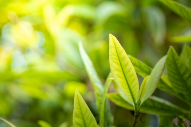 庭の日光の下で緑の葉を閉じます。コピースペースと自然な背景。
