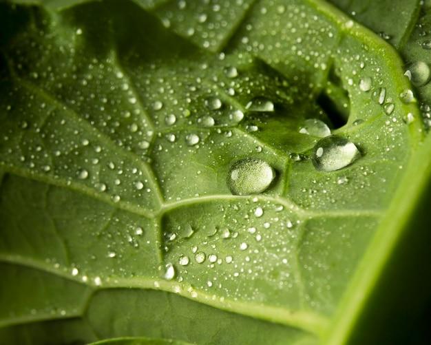 Foglia verde del primo piano con le gocce d'acqua
