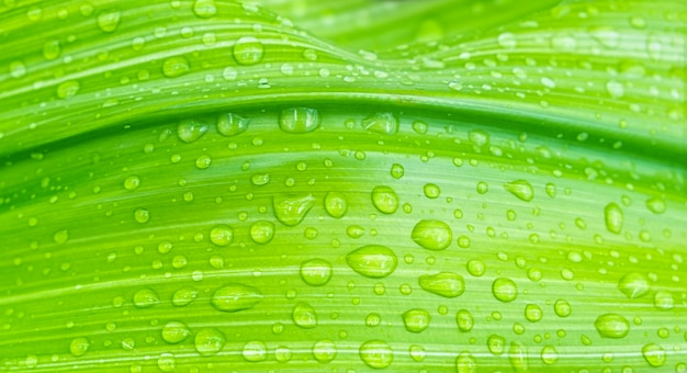 Close  up of green leaf with waterdrops, background