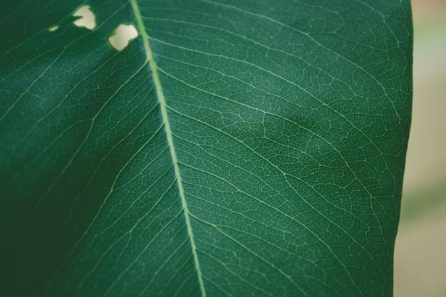 Close up green leaf