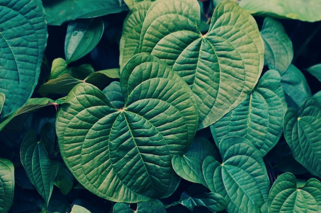 Close up of green leaves background for nature concept Premium Photo