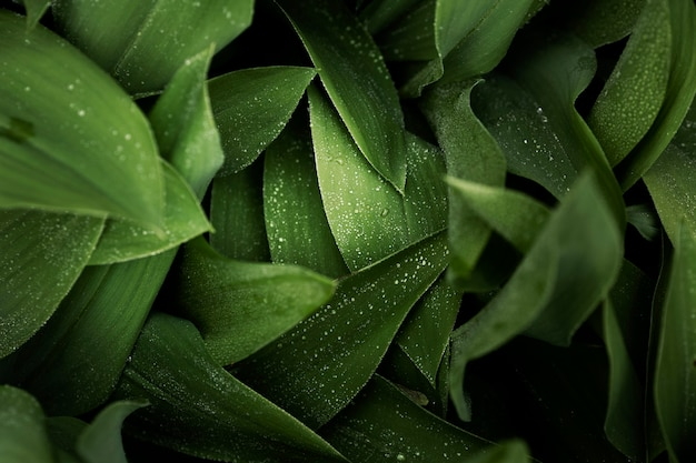 Close up on green leaves in nature