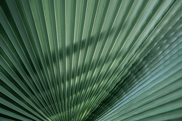 Close up green leaves textures, straight lines. green palm leaf background, full frame shot.