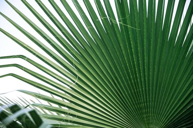 Закройте вверх текстуры зеленых листьев, прямые линии