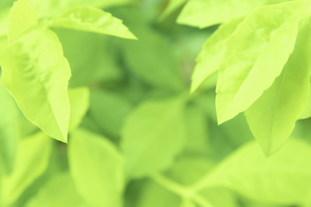 Close up green leaves of view texture green nature blurred background in park, garden or forest. use to write or copy in empty space on green nature background.