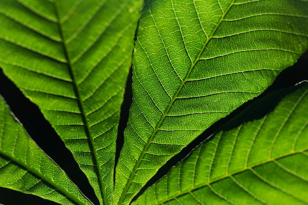 Close up of green leaves with black background