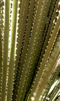 Close-up of green leaves with spikes