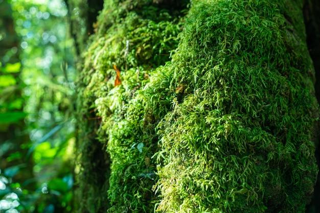 森の木のクローズアップ緑の苔