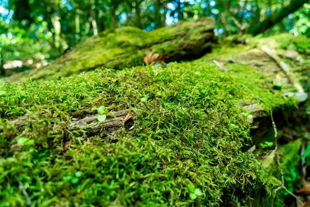 Крупным планом зеленый мох на дереве в лесу