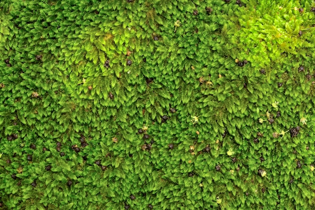 Close up green moss texture on stone and rock, background, nature plant, moss wall