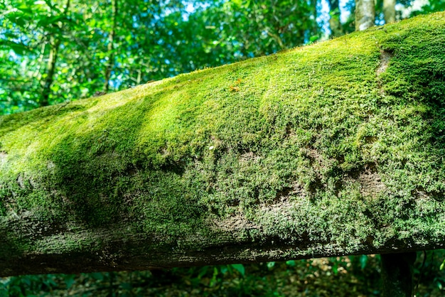 Close-up green moss on tree in the forest