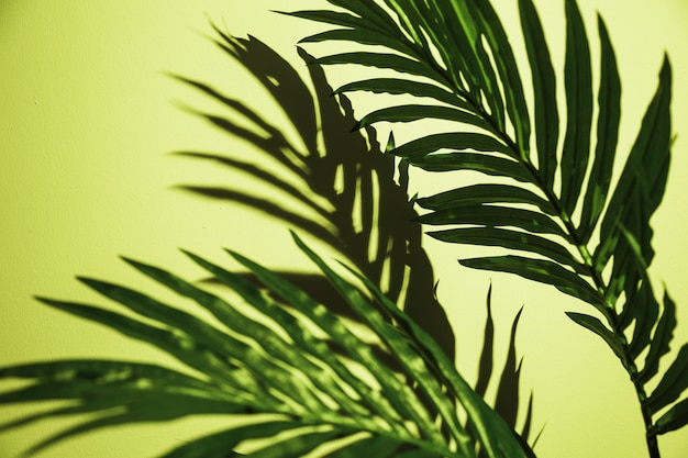 Close-up of green palm leaves on mint green backdrop
