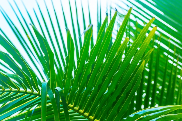 Close up green palm leaves over sky, fresh exotic tree foliage, paradise beach