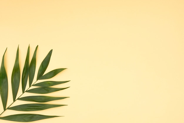 Close-up of green palm leaves on yellow background