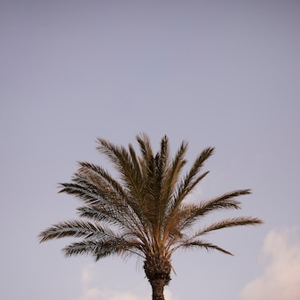 Close-up of green palm tree against blue sky