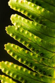 Крупным планом зеленые листья растений