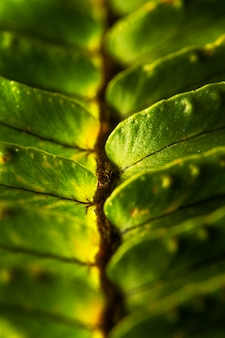Close-up of green plant leaves