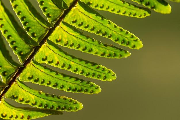 Foglie verdi della pianta del primo piano