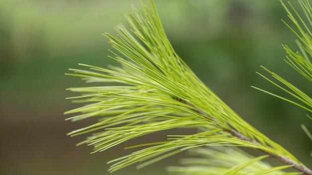 ぼやけた背景を持つクローズアップ緑の植物