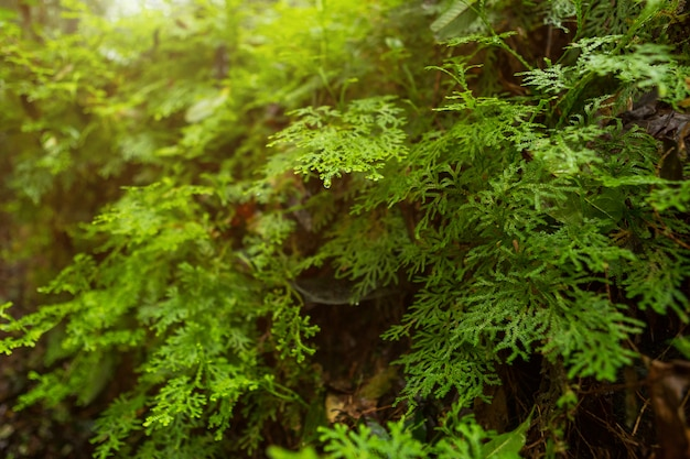 Close-up of green sphagnum moss in autumn in tropical rainforest foggy weather