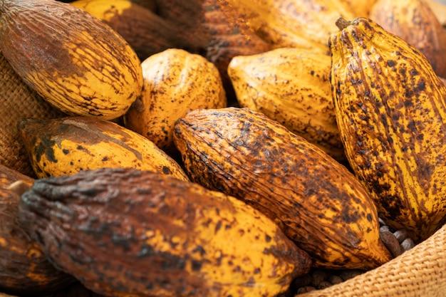 Close up a group of ripe cocoa pod