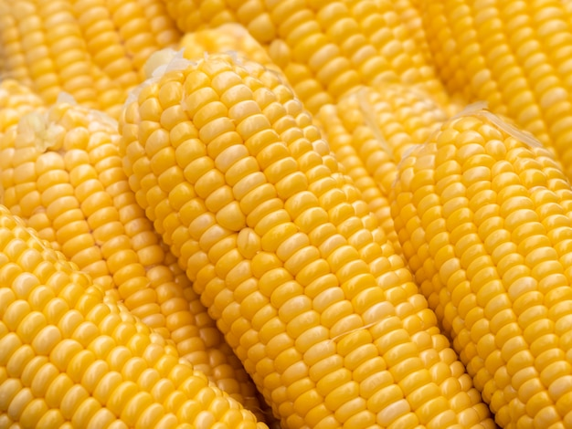 Close-up group sweet corn.