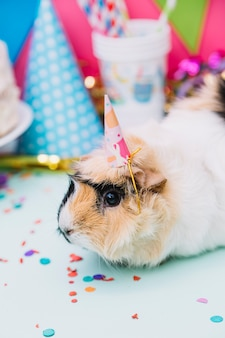 Close-up of a guinea pig wearing tiny party hat sitting on blue backdrop with confetti