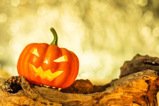 Close-up of halloween pumpkin on wooden timber in warm light