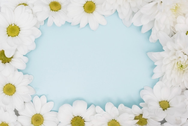 Close-up halves of daisies and copy space