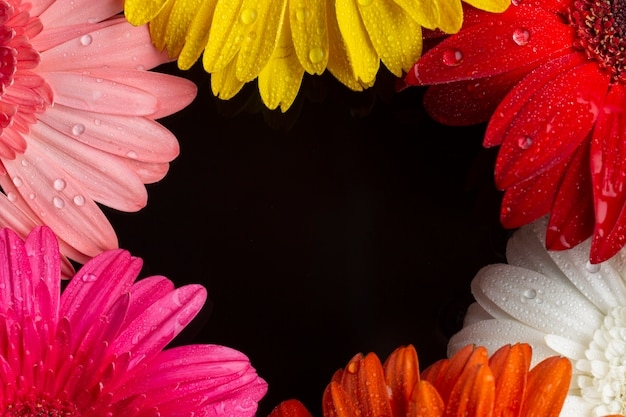 Close-up halves of gerbera flowers with copy space
