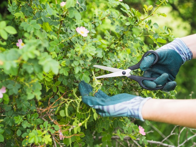 Close-up of hand cutting plants with scissor