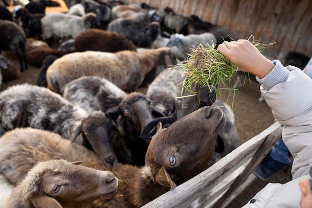 Close up hand feeding animals