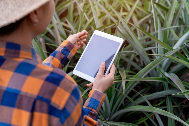 Close up hand female farmer see growth of pineapple in farm and save the data to the tablet
